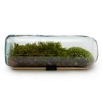 Moss Terrarium Bottle