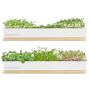 Micro-Green Kits